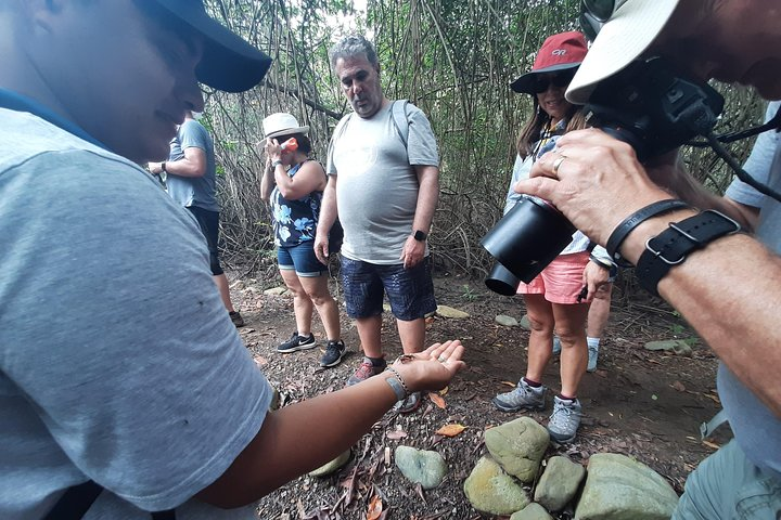 Full day to Ecological Reserve Churute Mangrove and Cacao Farm Visit, Guayaquil, ECUADOR