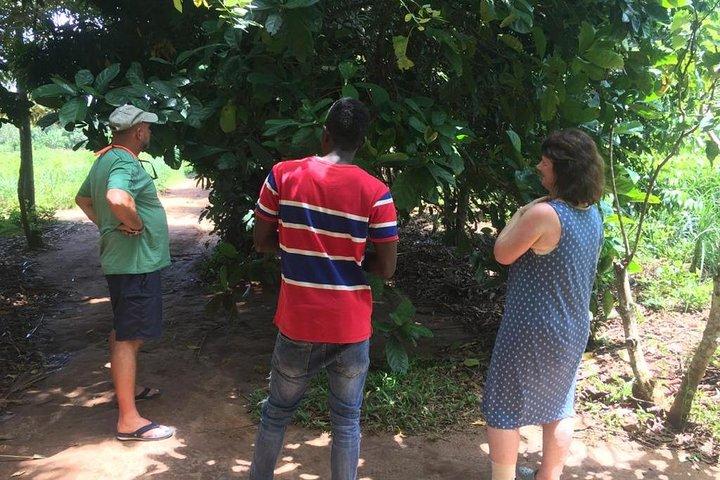 Spice Farm and Jozani Forest Private Tour, Zanzibar, TANZANIA