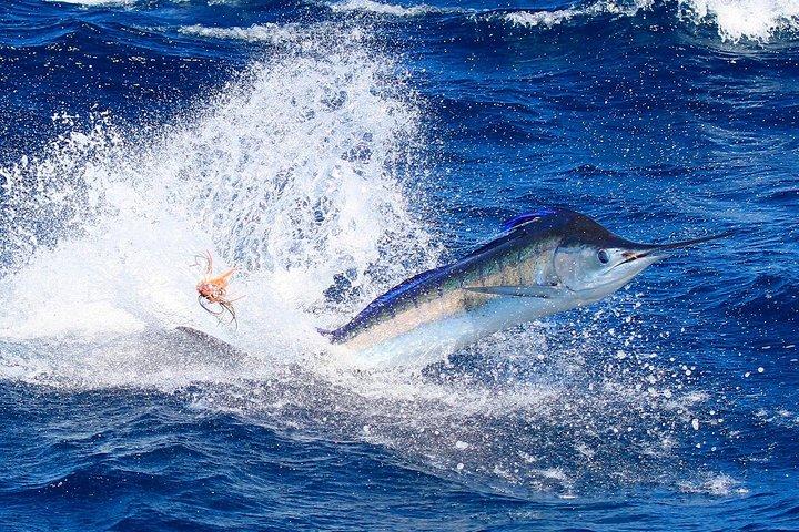 Blue Marlin Veracruz, Veracruz, MEXICO