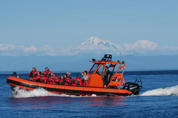 Whale Watching Nanaimo Open Boat Tour, Isla de Vancouver, CANADA