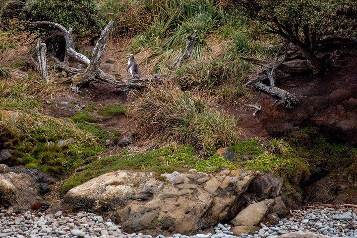 Stewart Island Wild Kiwi Encounter, Stewart Island, NUEVA ZELANDIA
