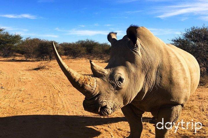Half Day Local Cuisine, Wine & Wildlife Experience, Windhoek, Namibia
