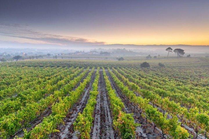 Tour Privado Bairrada (Aldeias Luso & Curia ) com Degustação de Vinho, Oporto, PORTUGAL