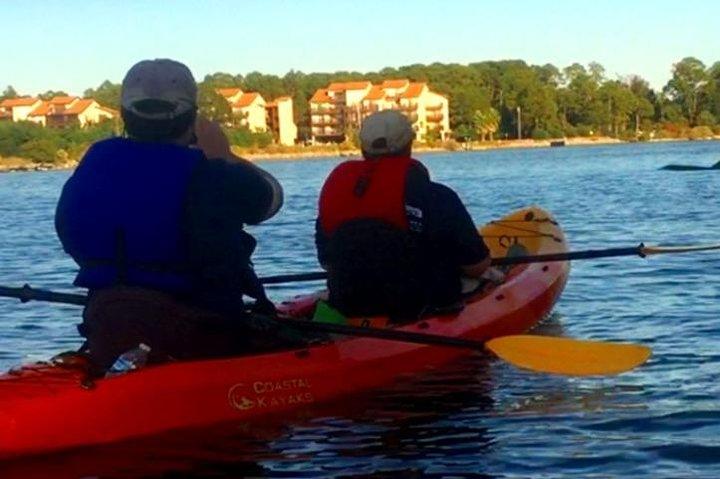 Dolphins and Wildlife Kayak Experience from Gulf Shores, Gulf Shores, AL, ESTADOS UNIDOS