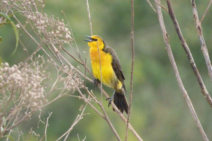 San Rafael National Park short break, Asuncion , Paraguay
