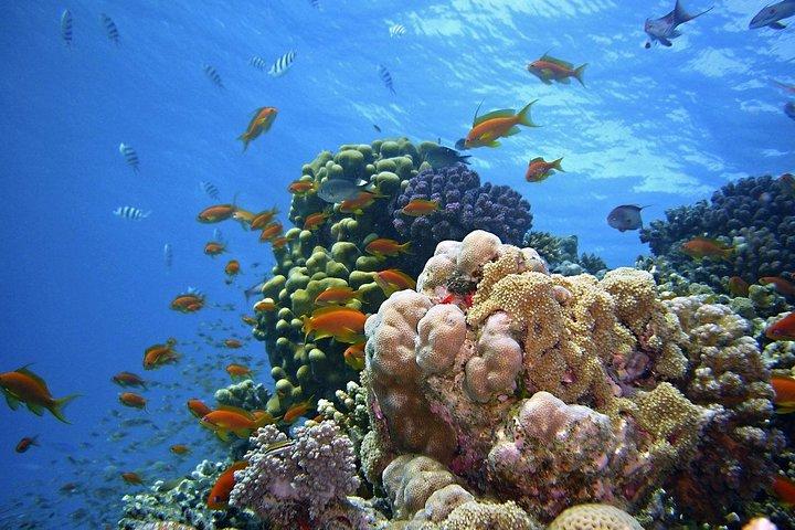 Snorkeling at Mnemba Atoll, ,