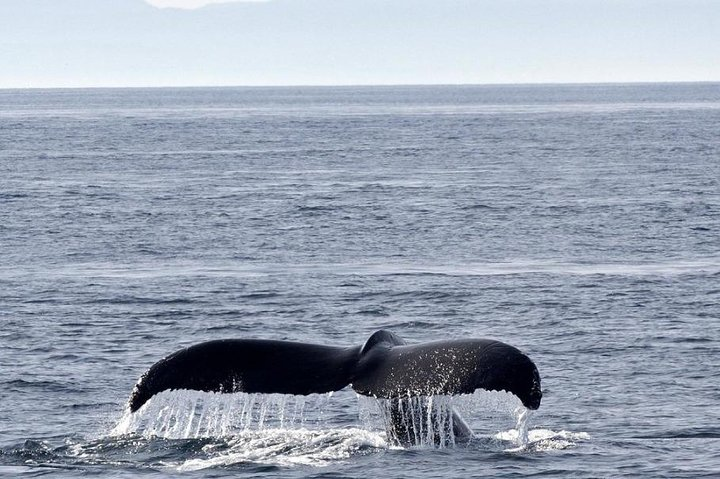 Victoria Shore Excursion: Whale-Watching Cruise with Expert Naturalist Guides, Isla de Vancouver, CANADA