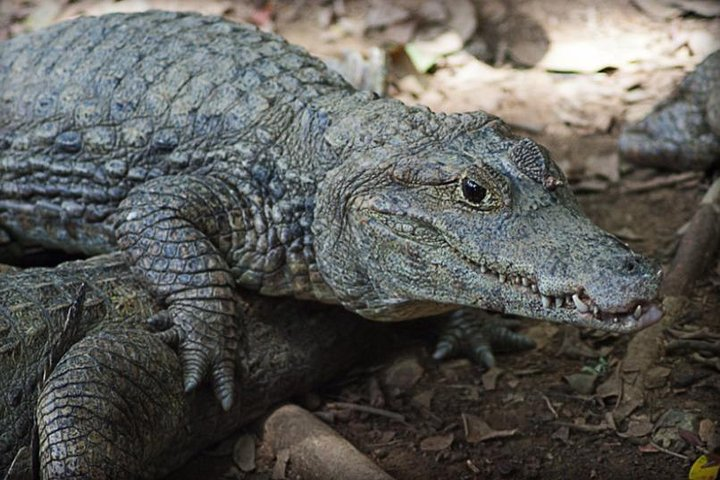 Tour to the Zoo El Pantanal in Guayaquil, Guayaquil, ECUADOR