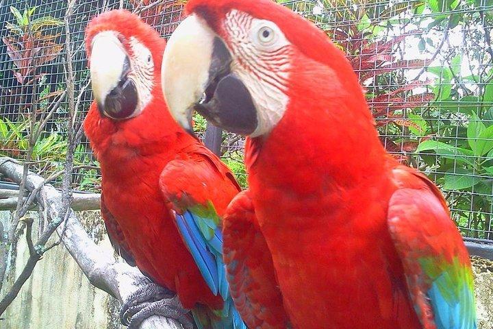 Jardin Encantado BOTANICAL PARK TOUR, Boquete, PANAMA