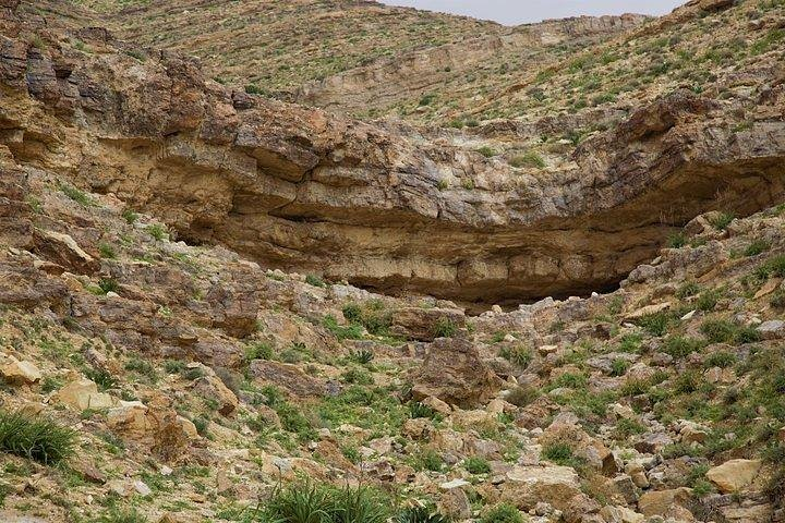 Learn How to herd sheep in Madaba, Madaba, Jordan