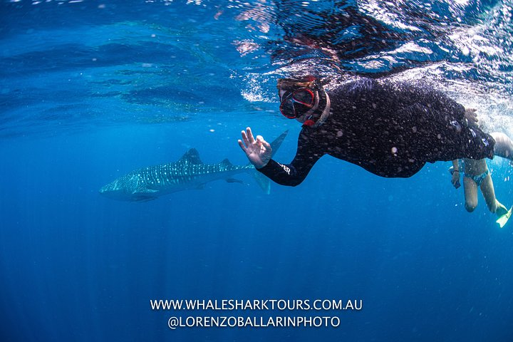 Full-Day Whale Sharks Swimming Experience on Ningaloo Reef, Exmouth, Austrália