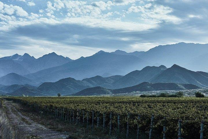 Full day luxury wine tour with gourmet lunch., Mendoza, ARGENTINA