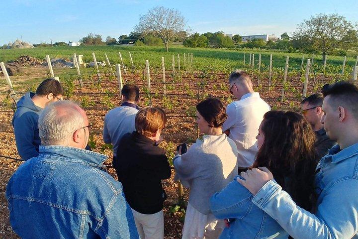 Locorotondo tour and wine tasting, Alberobello y Locorotondo, ITALIA