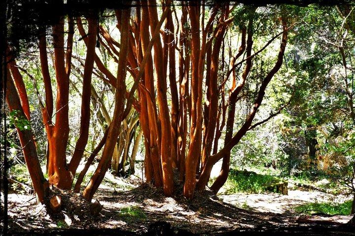 10 Secrets of Bariloche, Nahuel Huapi, and Patagonia, Bariloche, ARGENTINA