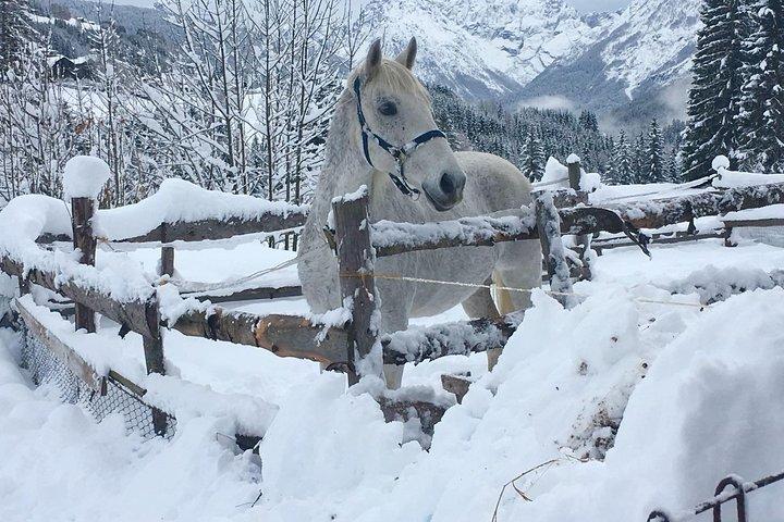 Horse riding experience from Bansko, Bansko, Bulgaria