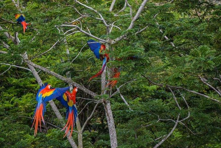 Manuel Antonio National Park, Kayak and Snorkeling Tour From San Jose., Quepos, COSTA RICA