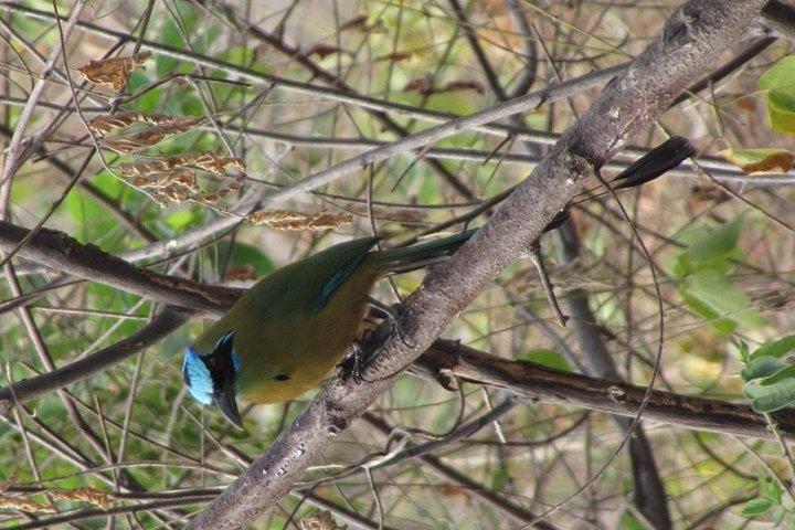 Full day birdwatching in guayaquil, Guayaquil, ECUADOR