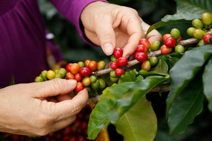Full-Day Tour into the Roots of Coffee in Veracruz, Veracruz, MEXICO