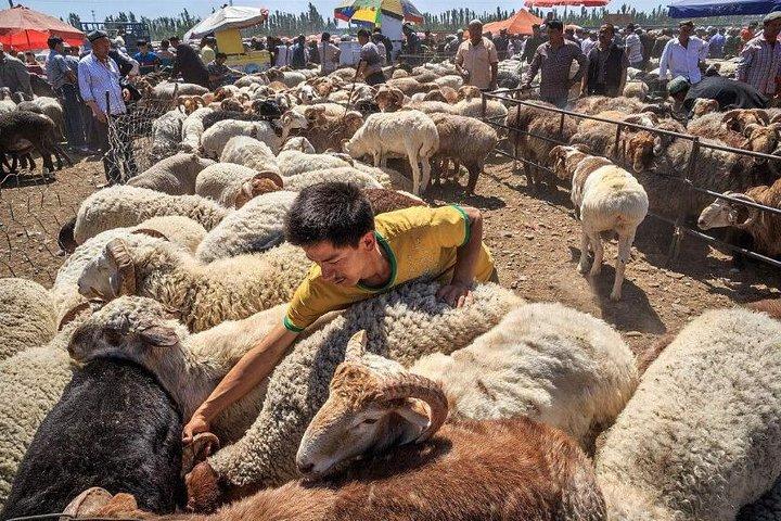 Full-inclusive Kashgar Private Day Tour with Sunday Market, Kashgar, CHINA