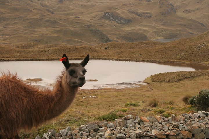 Shared Cajas National Park Half-Day Tour from Cuenca, Cuenca, ECUADOR
