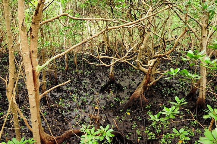 Jozani Forest and Village Tour in Zanzibar, Zanzibar, TANZANIA