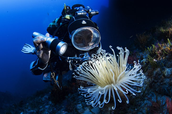 Scuba diving in Calabria, Italy, Tropea, ITALIA