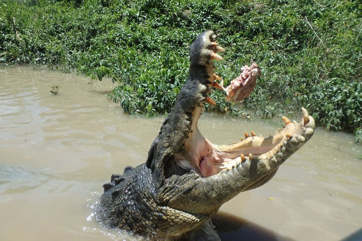Litchfield and Jumping Crocodiles Full Day Trip from Darwin, Darwin, AUSTRALIA