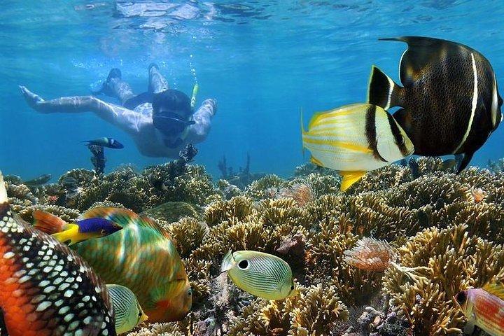 Dolphins and Snorkeling at Mnemba Island reef - Snacks Included, Zanzibar, TANZANIA