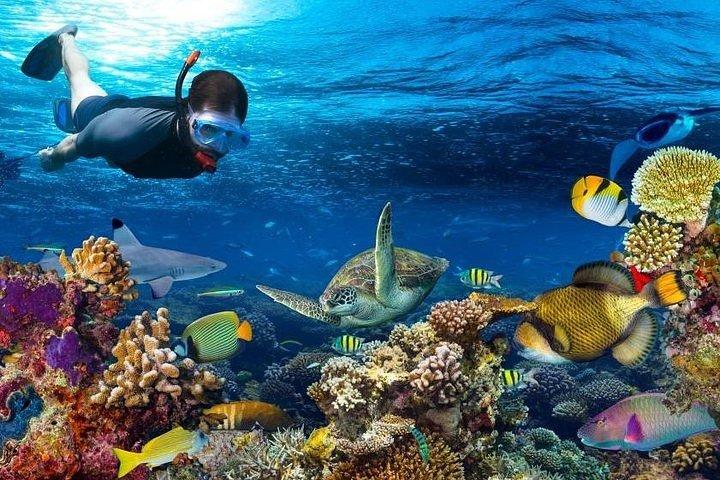 Snorkeling at Mnemba Island Atoll - Private Tour, Zanzibar, TANZANIA