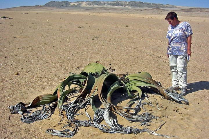 Private Highlights of Moon Landscape and Welwitschia Tour, Swakopmund, NAMIBIA
