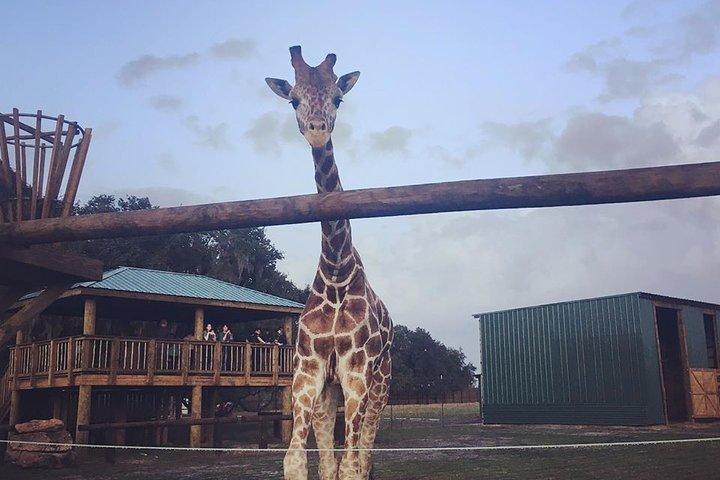 Central Florida Everglades and Safari Park Tour, Orlando, FL, ESTADOS UNIDOS