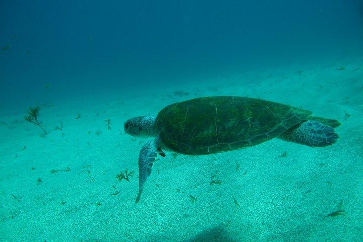 Paraty Scuba Diving Beginner's Course, Paraty, BRASIL