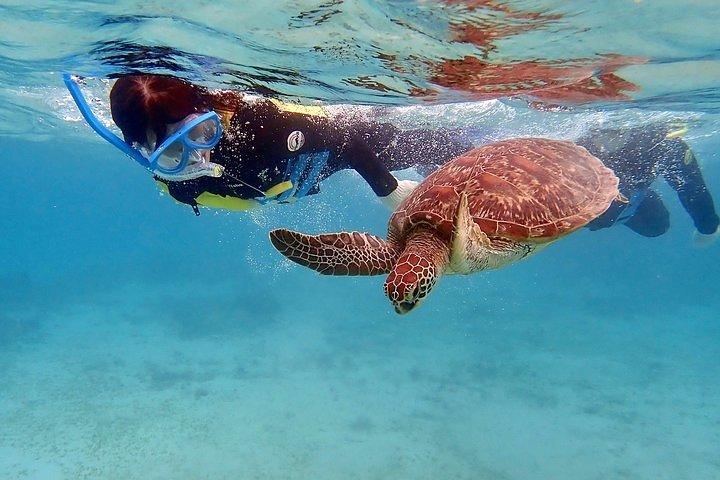 Snorkel/Swim with the Turtles Experience, Freeport, BAHAMAS