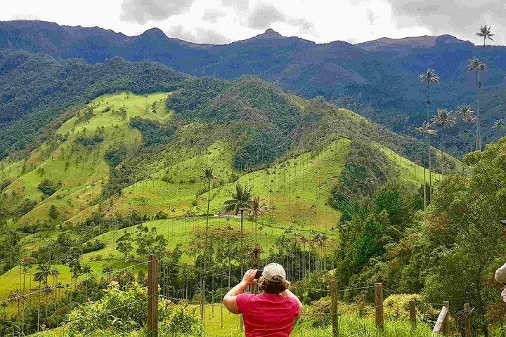Wax Palms, Salento and Coffee Private Full Day Tour, Salento, COLOMBIA