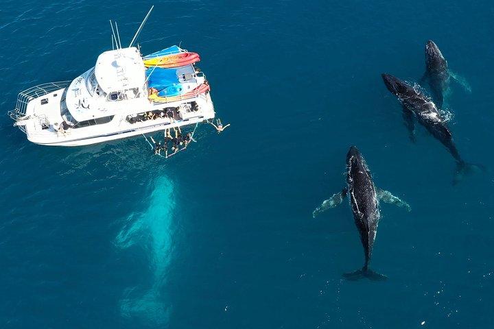 Remote Fraser Island & Whale Experience, Hervey Bay, Austrália