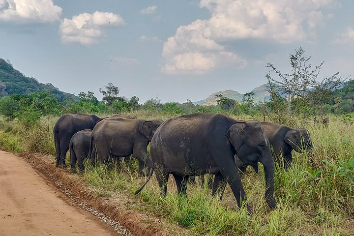 Hurulu Eco Park Private Safari from Sigiriya, Sigiriya, SRI LANKA