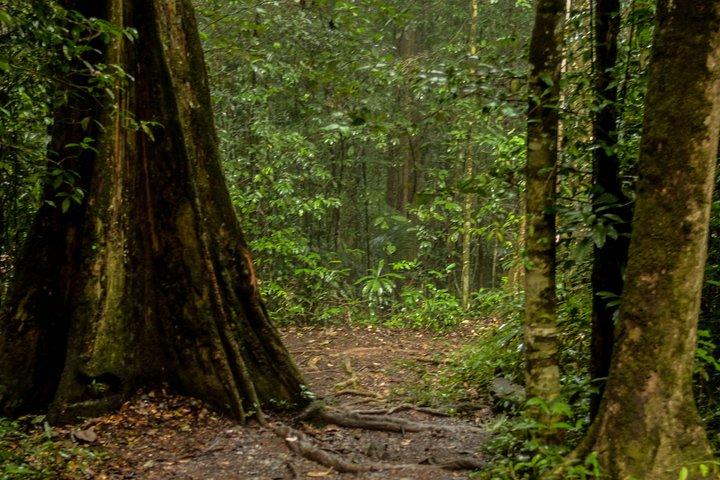 Brownsberg Hiking Tour, Paramaribo, SURINAM