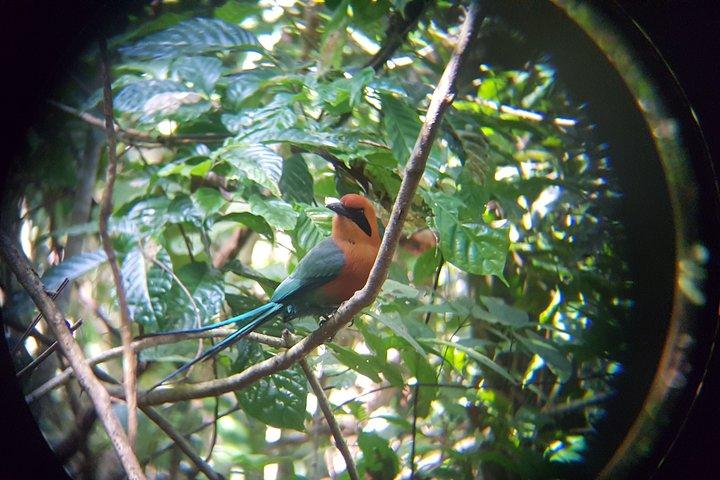 Virtual Birdwatching Tour at the Panama Canal, Gamboa, PANAMA