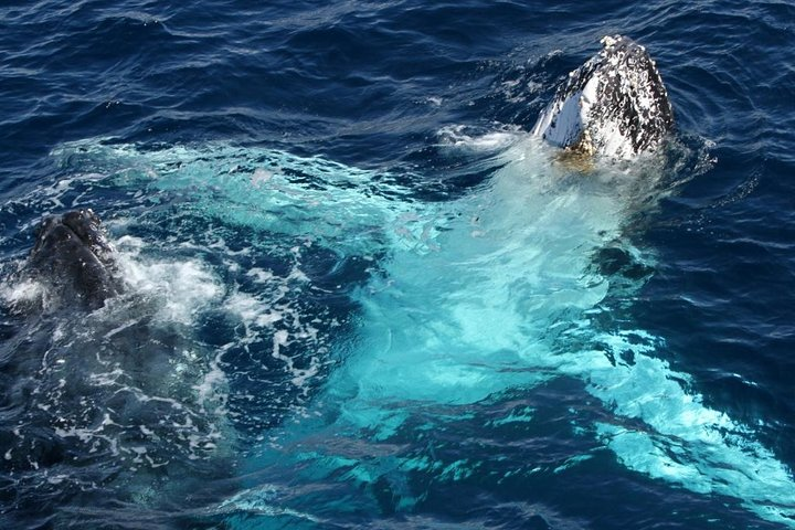 SALE! Whale Watching Tour Gold Coast, ,