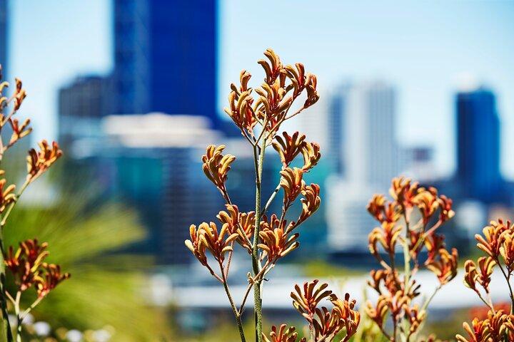 Best of Perth Wildflower Season Day Trip, Perth, Austrália