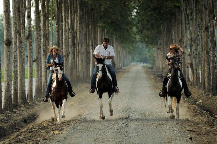 Full Day Danesa Farm Visit from Guayaquil, Guayaquil, ECUADOR