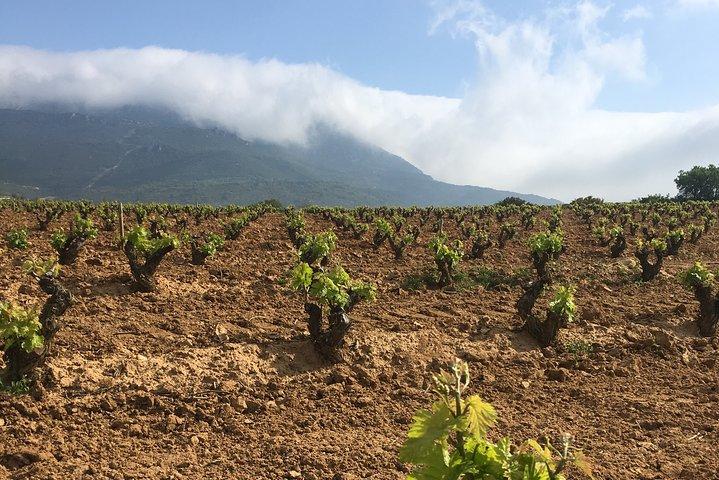 Rioja Alavesa: Kayak experience with wineries, La Rioja, ARGENTINA