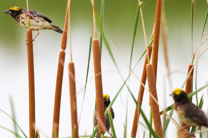 Birdwatching in Jaffna Lagoon, Jaffna, Sri Lanka