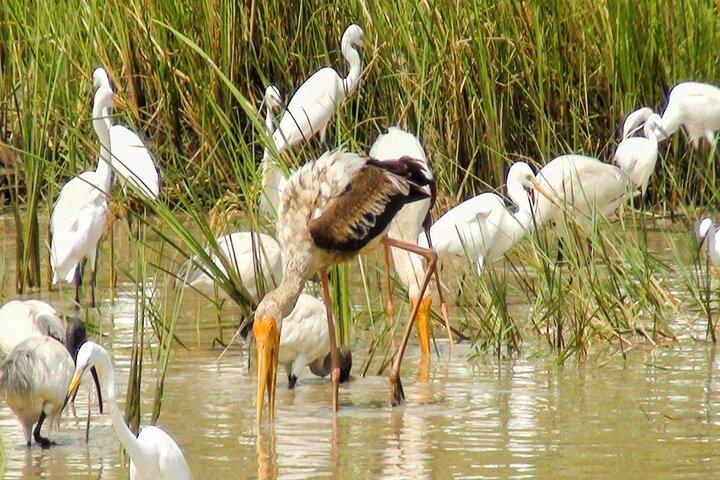 Birdwatching in Chundikulam National Park, Jaffna, Sri Lanka