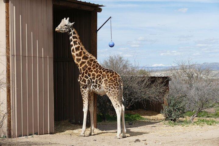 Out of Africa Wildlife Park Admission Ticket, Flagstaff, AZ, ESTADOS UNIDOS