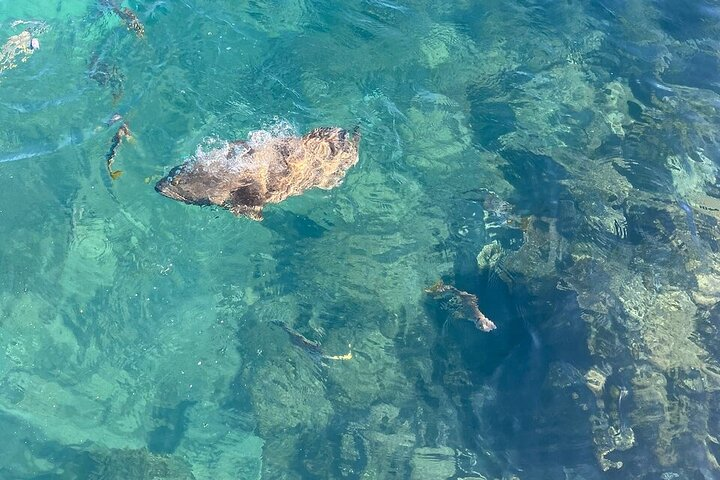 Aquascene Magnetic Island Discovery Tour, Isla Magnetic, AUSTRALIA