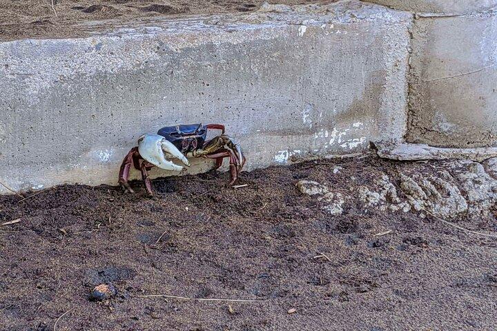 Passeio 4 em 1 - Mazunte, Fábrica de Cacau, Parque Nacional La Ventanilla e Spawn de Tartarugas, Huatulco, MÉXICO