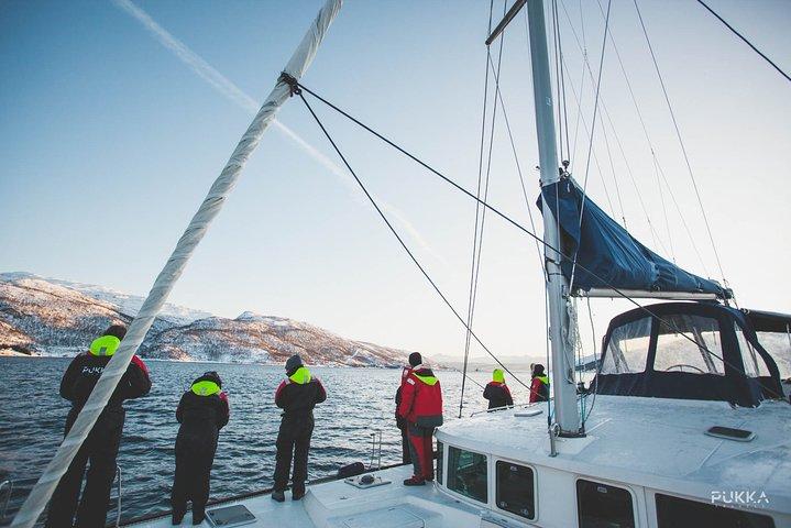 Arctic Sail Safari, Tromso, NORUEGA