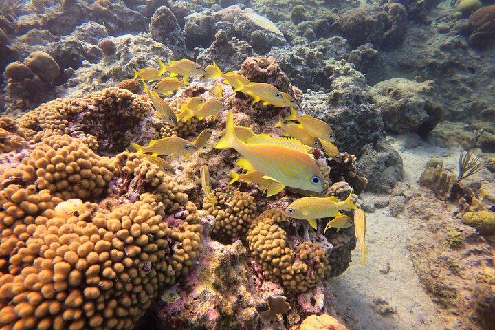 Snorkel Tour, Curazao, BRASIL