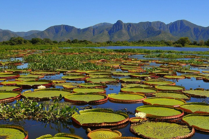 6-Days North Pantanal Experience - Following the footsteps of the Jaguar, Cuiaba, BRASIL